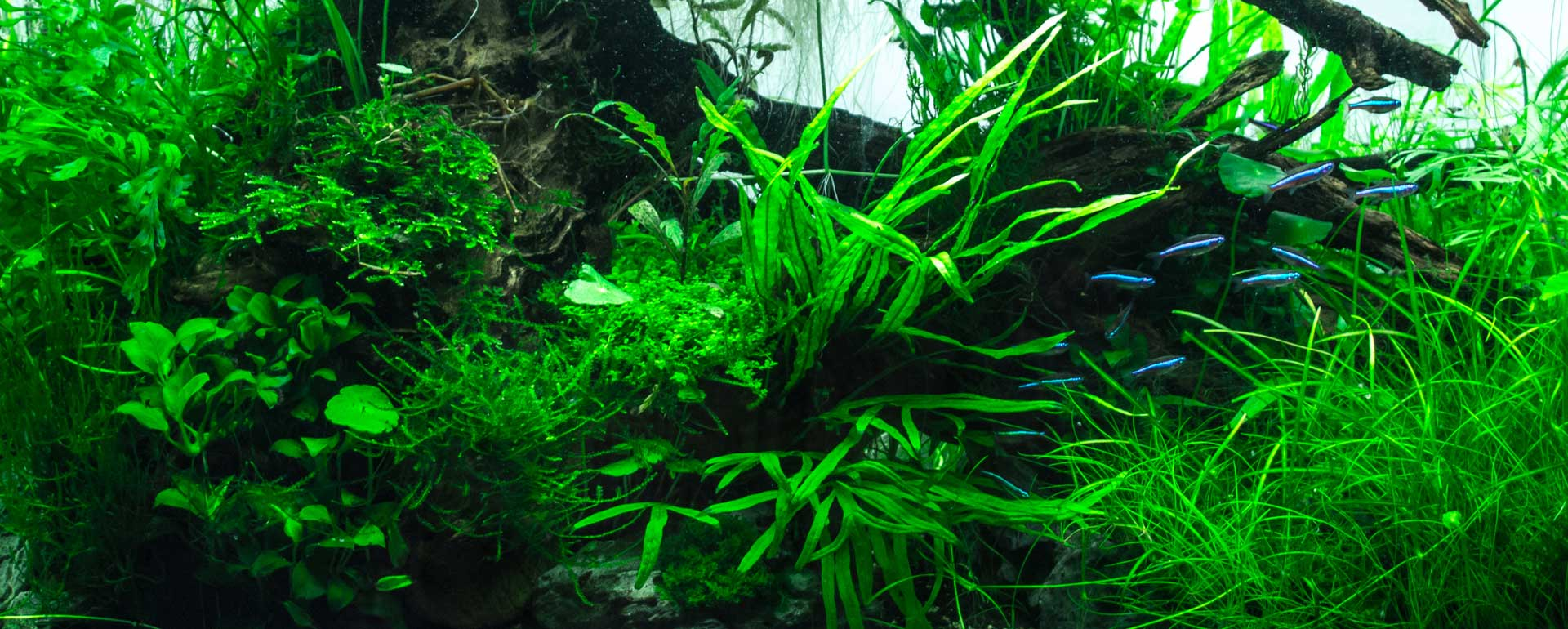 pantallas led acuario