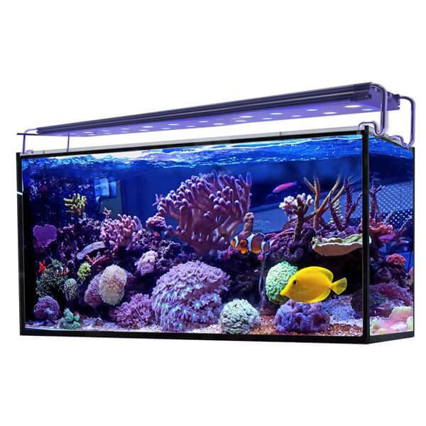 Acuario marino Hydra 240