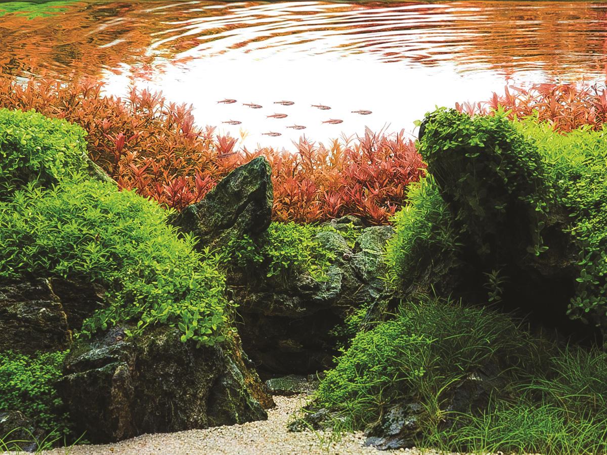 abonos para plantas de acuario