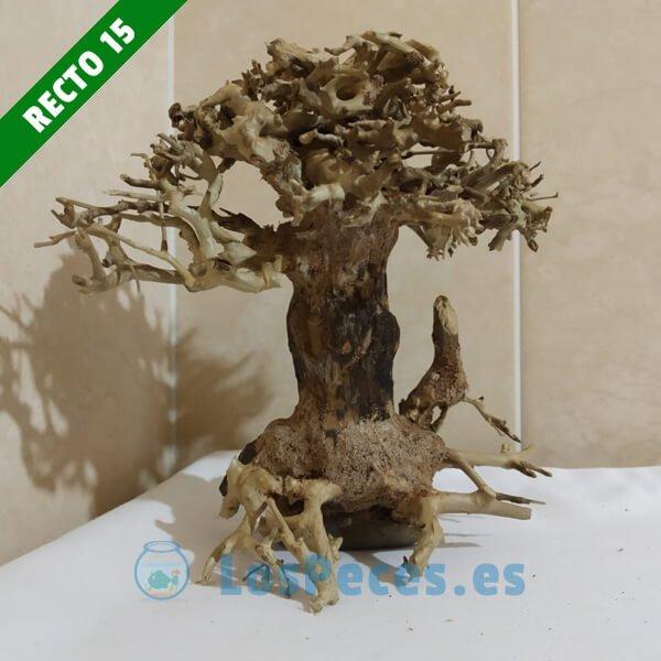 bonsái recto 15 cm