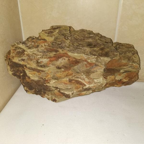 Roca dragón mediana