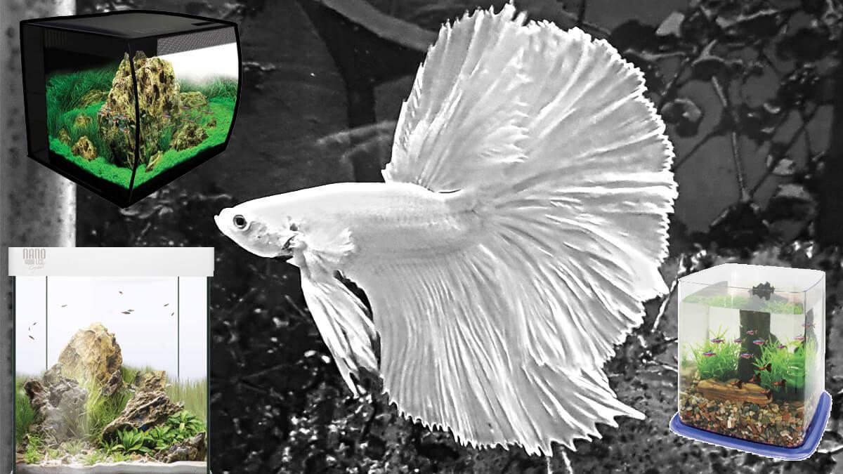 Los mejores acuarios para peces Betta