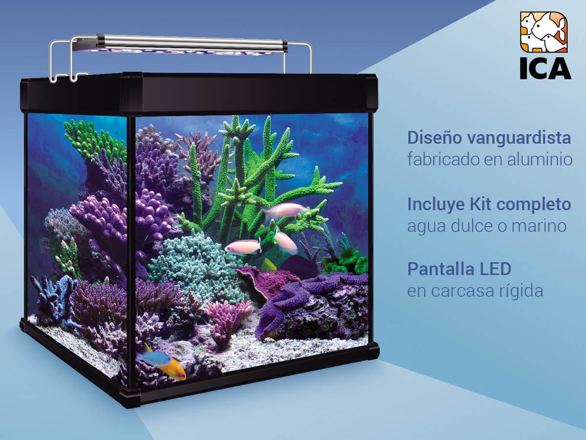 Información importante para comprar un acuario cubo